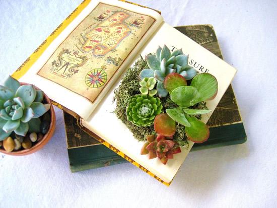 Plante suculentas em livros