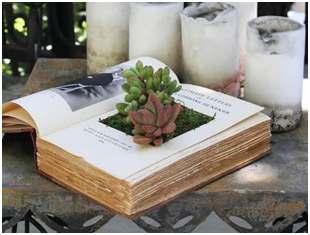 Como plantar dentro de um livro