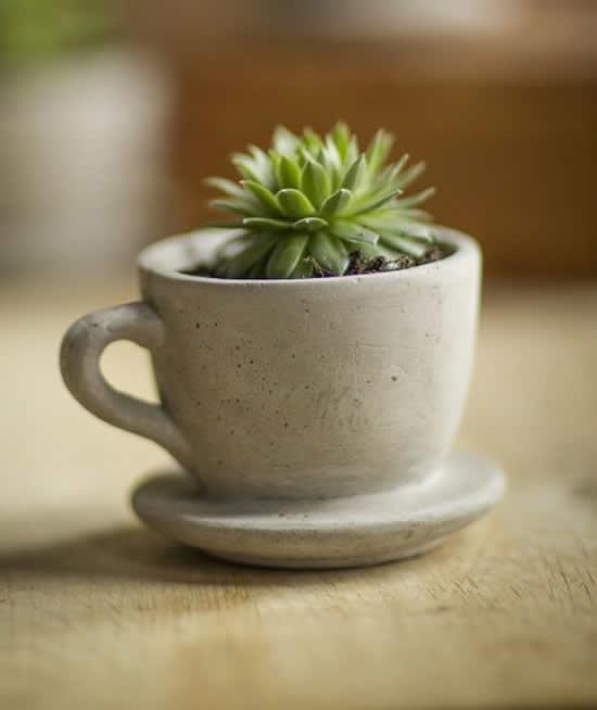 Plante suculentas em xícara