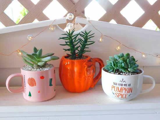 Plante suculentas em xícaras