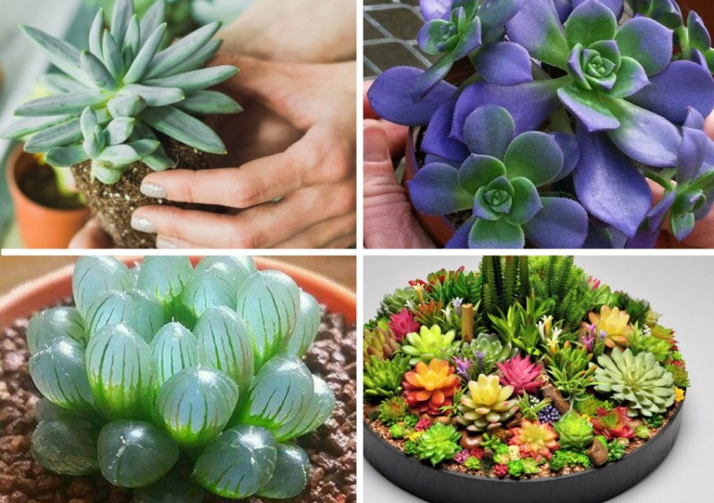 Vem vem ver diversas opções de suculentas em cestas.São lindos arranjos com suculentas em cestas para você usar na casa ou jardim.