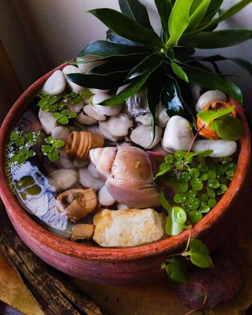 linda fonte com plantas