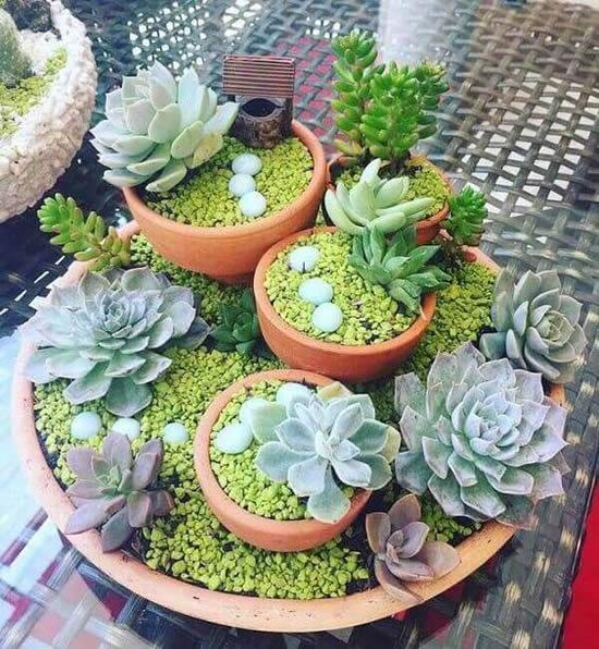 Ideias para mini jardim com suculentas