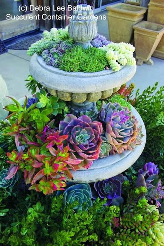 Lindo mini jardim com suculentas