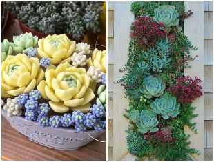 Ideias para plantar suculentas de forma criativa