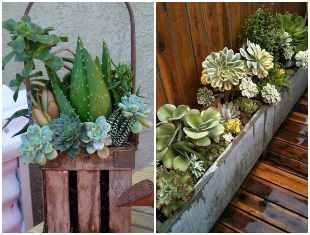 Plante suculentas em caixotes de madeira