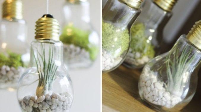 suculentas em lâmpadas (1)