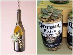 Terrários com suculentas em garrafas de vidro