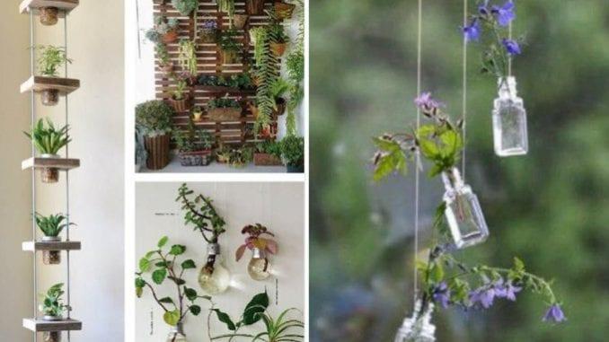 Ideias para decorar com plantas penduradas