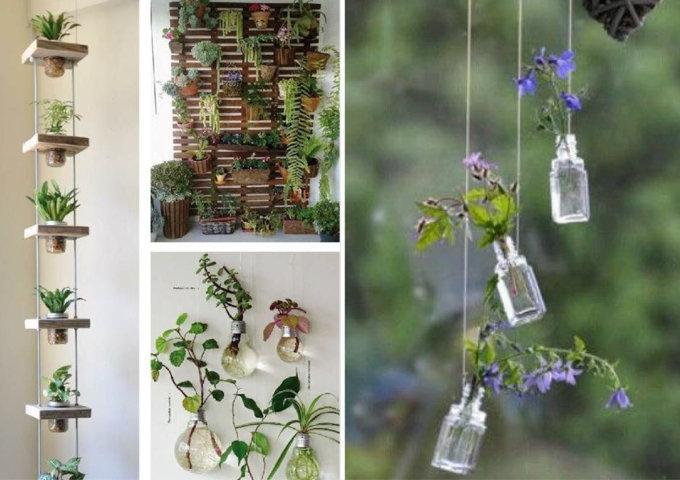 Veja como fazer decoração com plantas penduradas