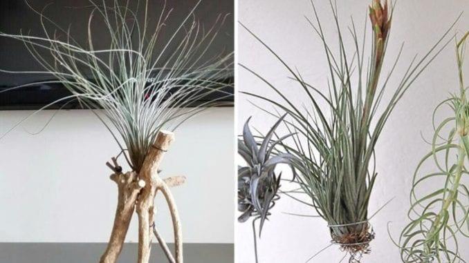 como cultivar planta aéreas (2)