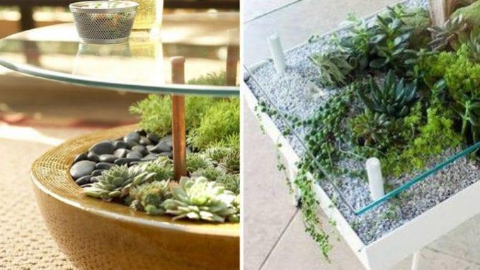 mesas de vidro com suculentas-01
