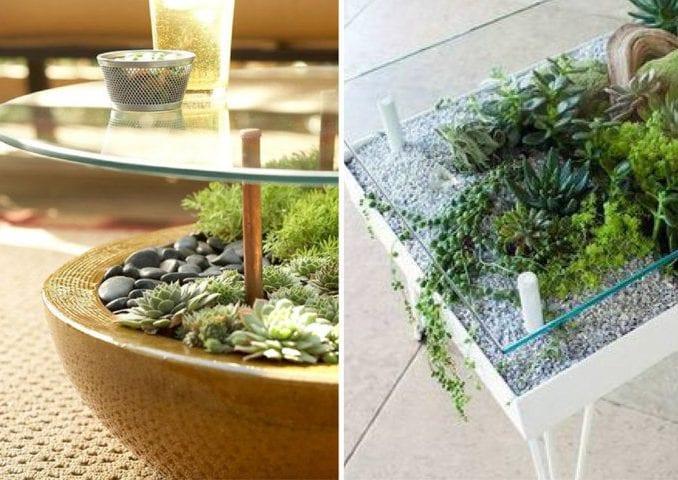 suculentas em mesas de vidro