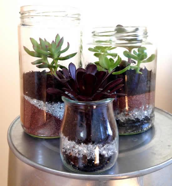 Ideias com suculentas em potes de vidro