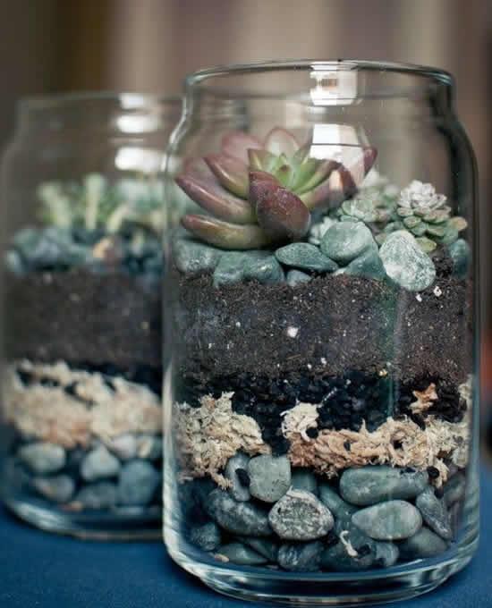Plante suculentas em potes de vidro