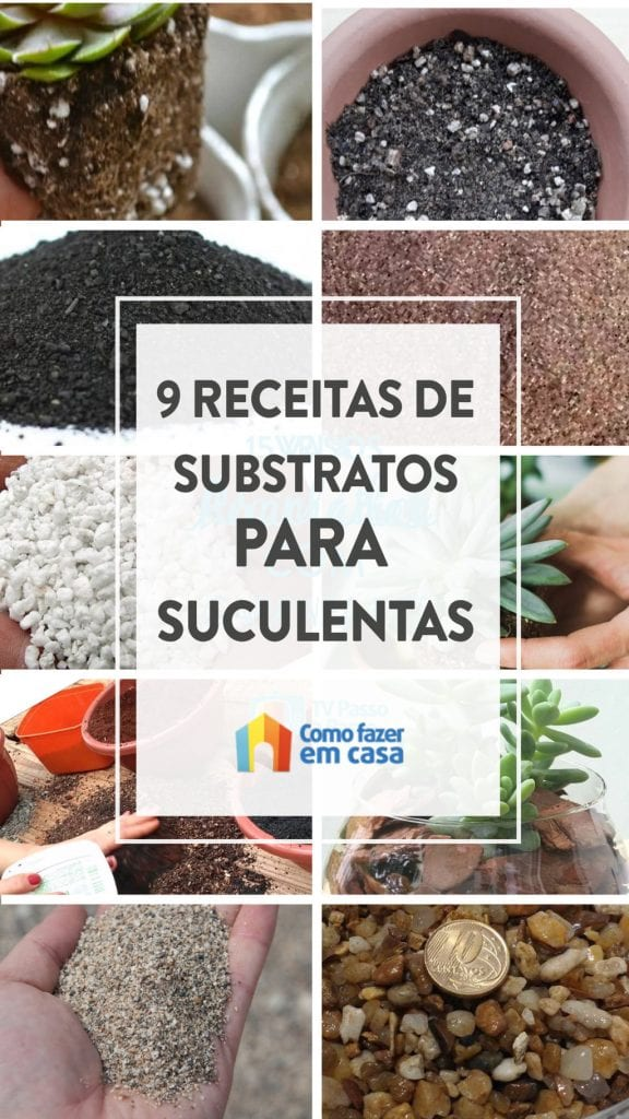 substratos para plantar suculentas