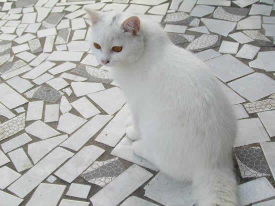 Aprenda como cuidar de gatos