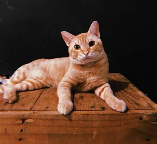 Como cuidar de gatinhos