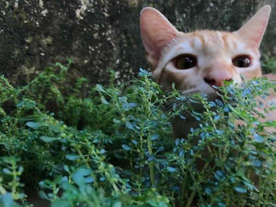 Adotei um gato! Como cuidar?