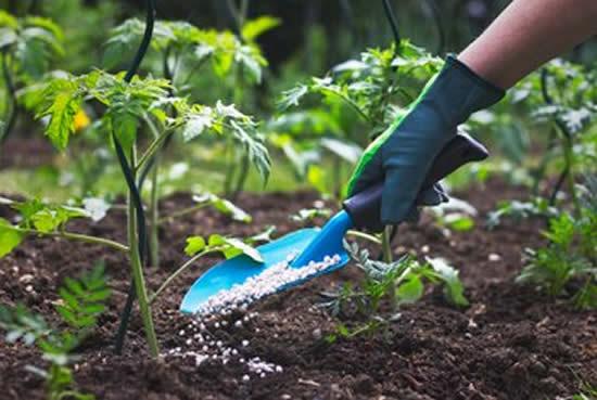 Como usar ureia nas plantas
