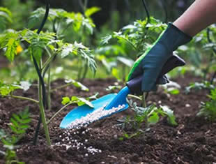 Como usar ureia agrícola nas plantas