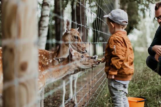 Levar as crianças no zoológico