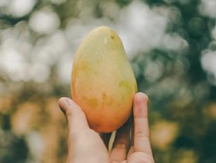 Saiba quais os benefícios de comer manga