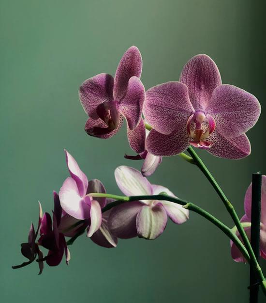 Cuidados básicos com orquídeas