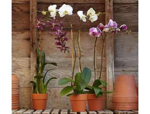 Qual melhor vaso para orquídeas?