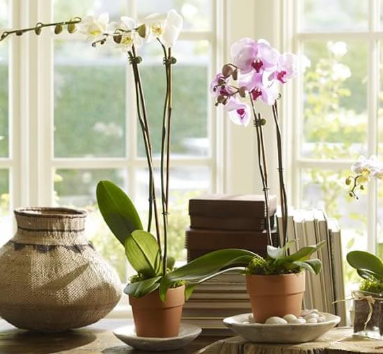 Orquídeas em vasos de barro
