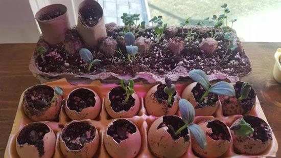Como fazer sementeiras para mudas
