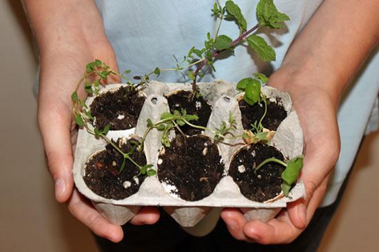 Ideias de sementeiras para mudas