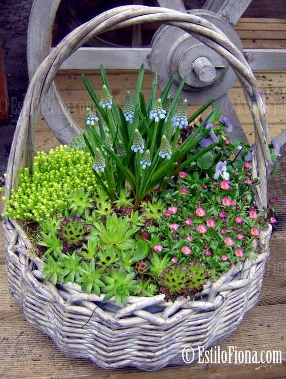 Suculentas em cestas