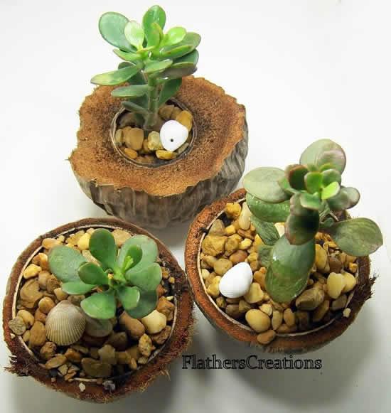 Vasos feitos com coco