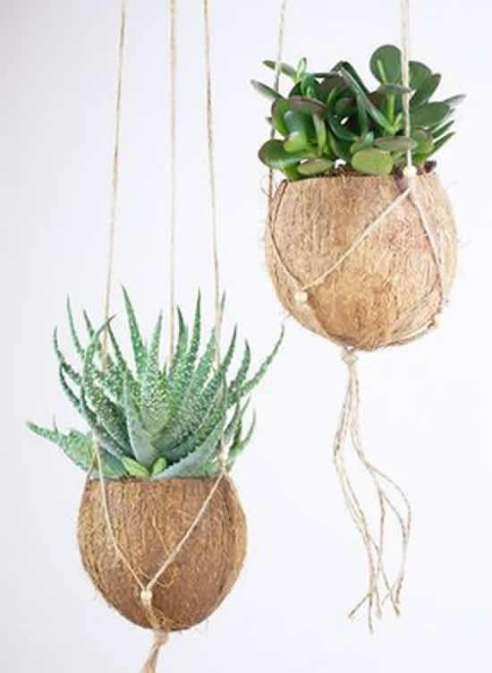Vasos para suculentas com cocos
