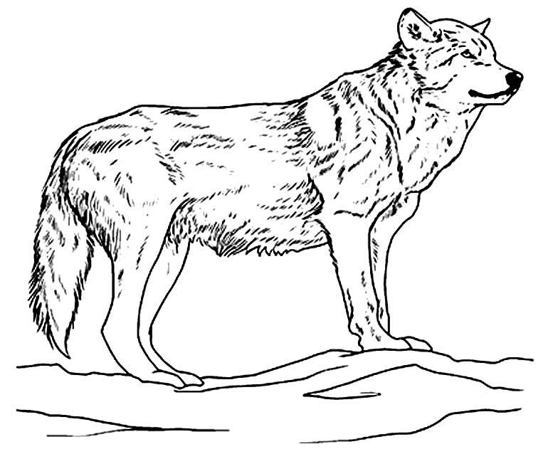 Desenho de lobo para colorir