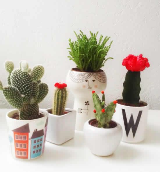 Plante cactos em copos e potes