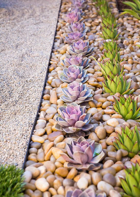 Decoração linda com suculentas para o jardim