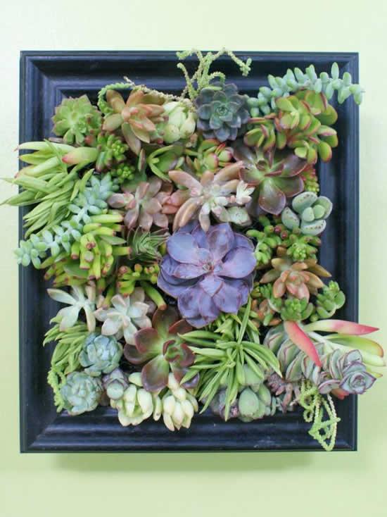 Jardim repleto de suculentas decorando