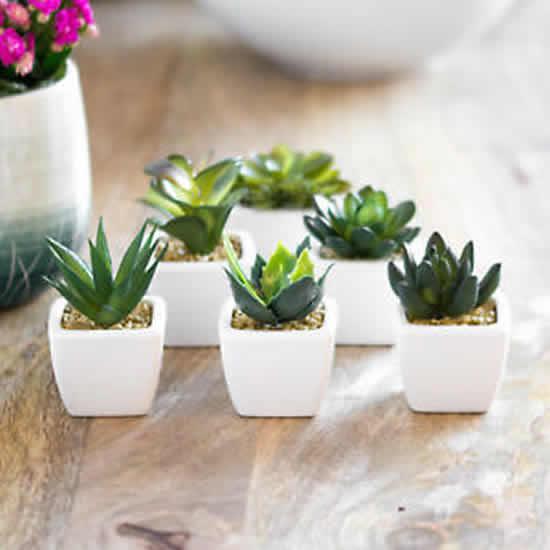 Lindas plantas para decoração do apê