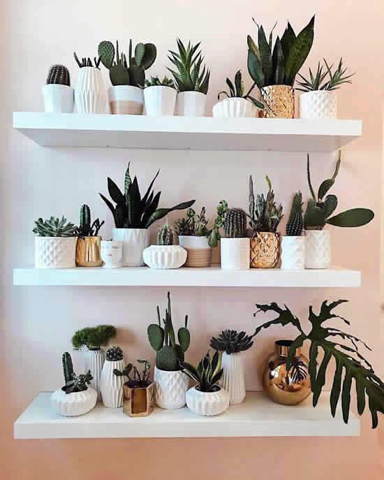 Plantinha lindas para decoração do apê