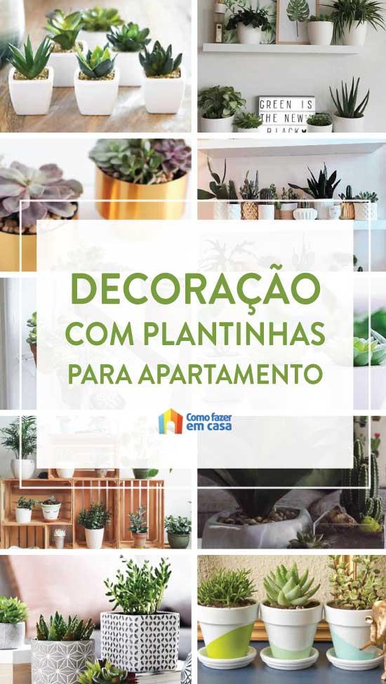 Plantinhas para decorar apartamento