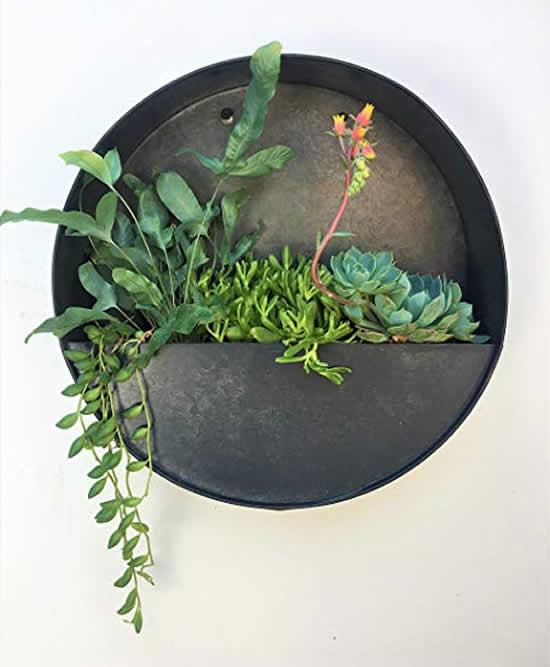 Lindas ideias para cultivar suculentas na sala
