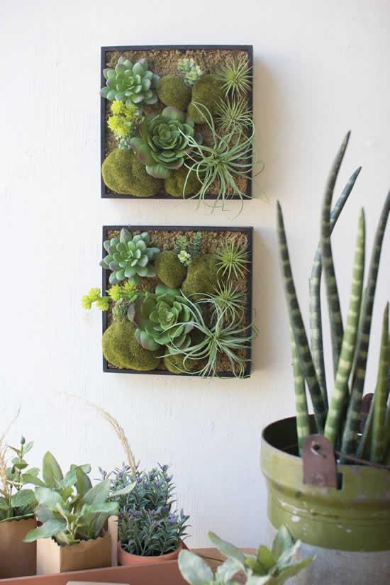 Lindas ideias para cultivar suculentas na parede da sala