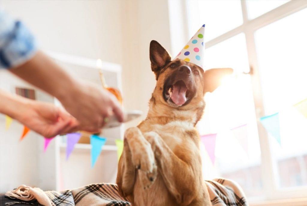 Chapéu de festa para cachorro