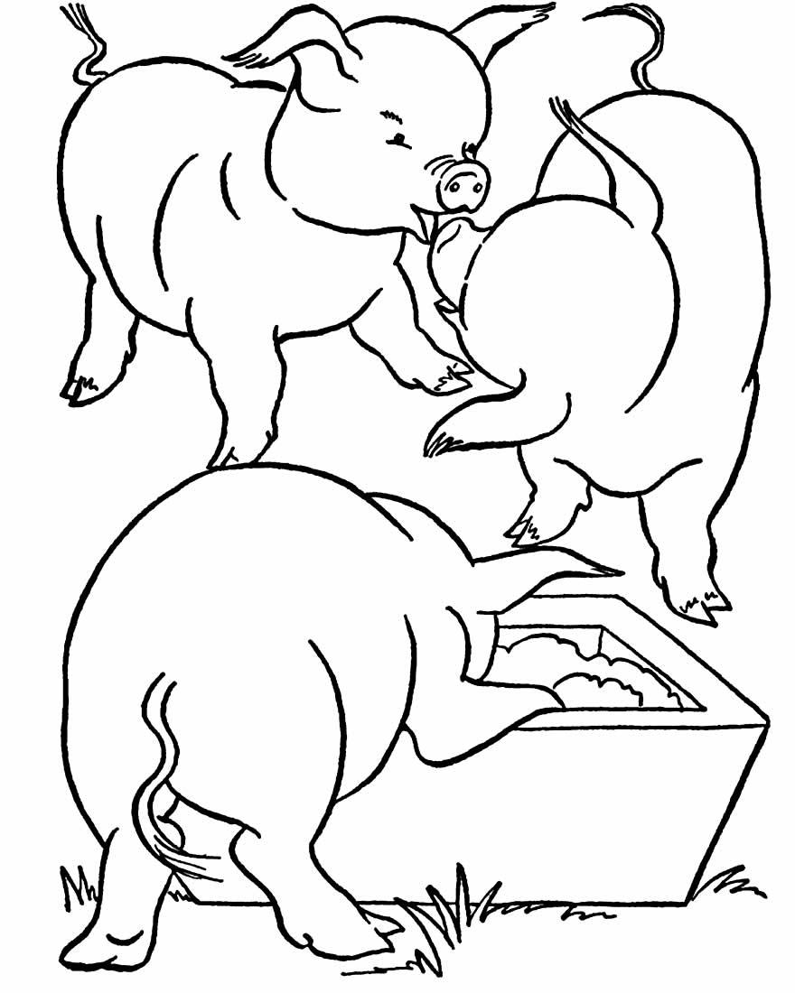 Desenho para colorir de porquinhos