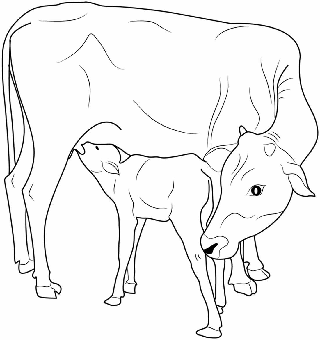 Desenhos para colorir de vacas