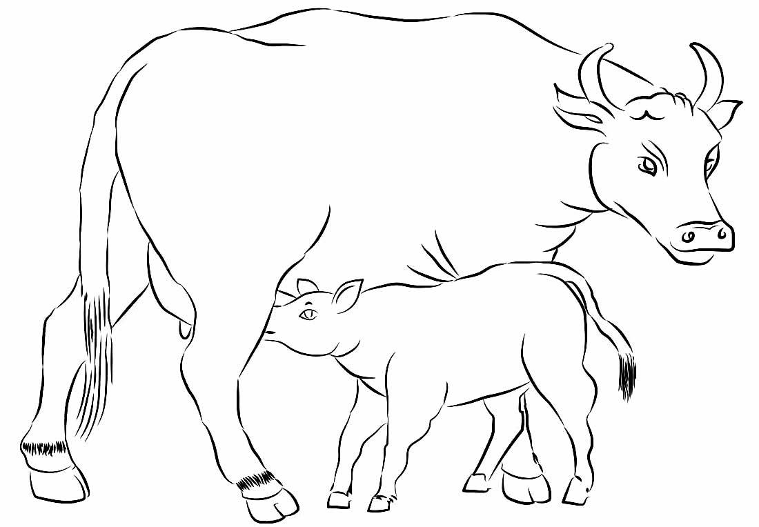 Desenhos para colorir de vaca