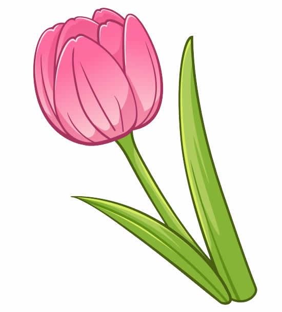 Molde de Tulipa