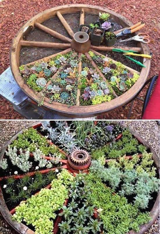 Mini jardim de suculentas
